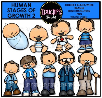 Human Stages Of Growth 2 - Caucasian Male {Educlips Clipart}