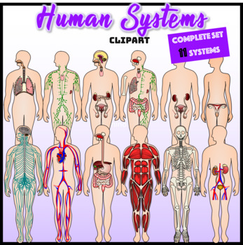 Human Systems Clipart