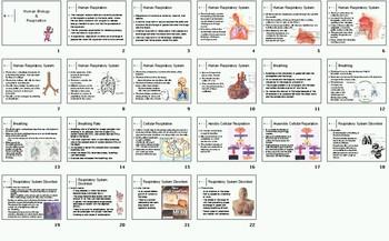 Human Systems Homeostasis Unit Bundle - 39 files