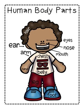 Montessori Inspired Body Parts Posters, Puzzles, Coloring, and Flash Cards Pack
