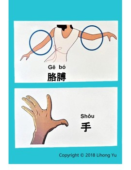 41 pages of Human body parts in Chinese,posters,flashcards,worksheets 中文身体部位名称