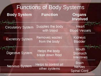 Functions of the Human Body Systems
