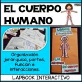 Human body systems lapbook   Sistemas del cuerpo humano interactivo