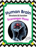 Human Brain Scavenger Hunt