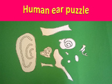 Human ear puzzle