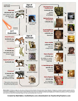 Human evolution timeline