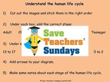 Human life cycle / Human stages of development Lesson plan, Text and Worksheets