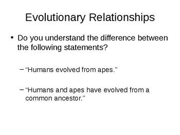 Human vs Chimp DNA comparison activity