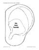 Humans Use Their Five Senses: Hearing