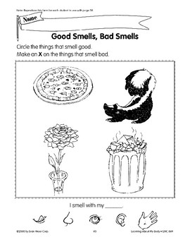 Humans Use Their Five Senses: Smell
