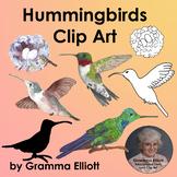 Hummingbird Clip Art Semi Realistic
