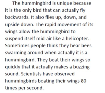 Hummingbird Informational Text and Comprehension Questions