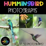 50 Hummingbird Photographs for Personal and Commercial Use