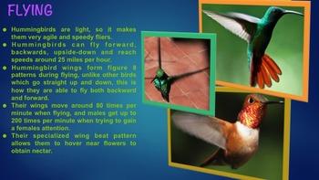 Hummingbirds - PowerPoint