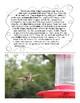 Hummingbirds: Non-Fiction Literacy Center or Close Reading Pocket Folders