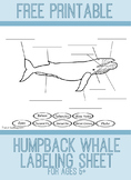 Humpback Whale Diagram Worksheet