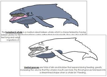 Humpback Whale Nomenclature Book