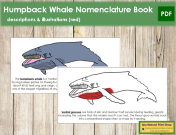 Humpback Whale Nomenclature Book (Red)