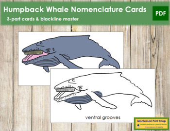 Humpback Whale Nomenclature Cards