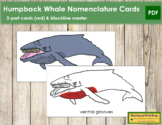Humpback Whale Nomenclature Cards (Red)