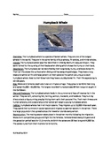 Humpback Whale - Review Article Facts 20 Review Questions Vocab Activites PDF