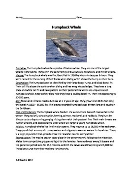 Humpback Whale - Review Article Facts 20 Review Questions