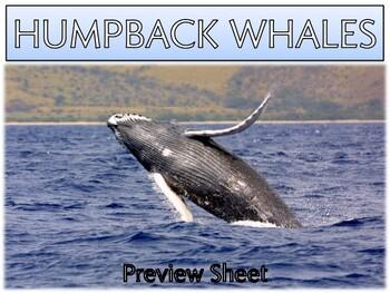 Humpback Whales - Mini Unit