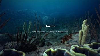 Hurdia