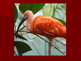 Hurst - The Scarlet Ibis Photos (Cross Curricular)