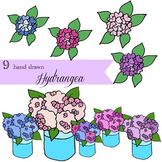 Hydrangea Clip Art} Hand drawn and digitally painted