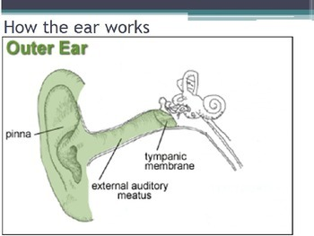 Hygiene - Ear Protection (POWERPOINT)