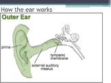 Hygiene - Ear Protection w/worksheet (SMART BOARD)