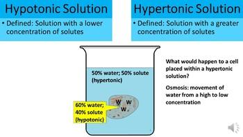 Hypotonic vs Hypertonic PowerPoint