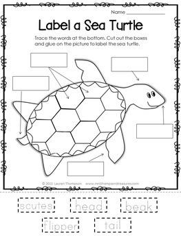 Animals Nonfiction Units & Graphic Organizers - BUNDLE