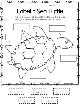 I Know About Sea Turtles: Nonfiction Mini Unit & Graphic ...