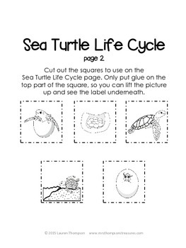 I Know About Sea Turtles: Nonfiction Mini Unit & Graphic Organizers
