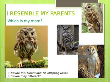 I RESEMBLE MY PARENTS - Baby Animals and Their Parents