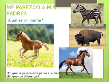 I RESEMBLE MY PARENTS - ME PAREZCO A MIS PADRES - Baby Animals and Their Parents