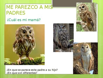 I RESEMBLE MY PARENTS - ME PAREZCO A MIS PADRES - ANIMALS AND THEIR BABIES