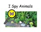 I SPY ANIMALS Adapted BOOK, AUTISM, Speech Therapy