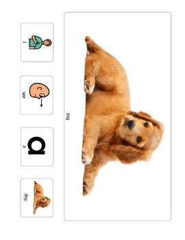 I See Animals Adapted Reader