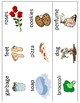 I Smell Mini Books Template - with Vocabulary Cards - 5 Senses