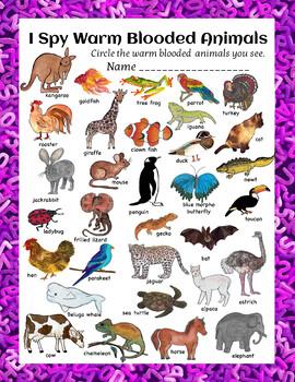 Animal Classification Worksheets of I Spy BUNDLE
