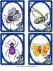 I-Spy CVC Tiny Words - Variable Vowel Words (May Edition) Set 2