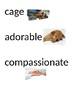 I Wanna Iguana Vocabulary