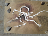Bas-Relief Dinosaur Fossils