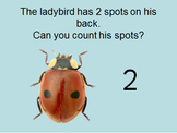 I can count in 2's with ladybirds