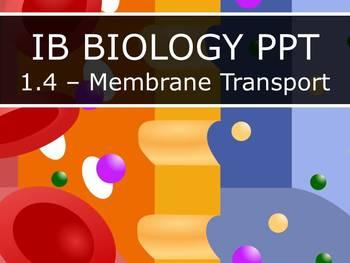 IB Biology (2016) - 1.4 - Membrane Transport PPT