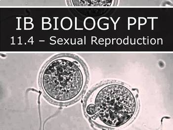 IB Biology (2016) - 11.4 - Sexual Reproduction PPT