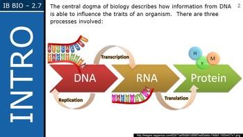 IB Biology (2016) - 2.7 - DNA Replication, Transcription & Translation PPT